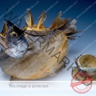 Frances Ann Reed (American, 1943-2008) Fish Teapot,