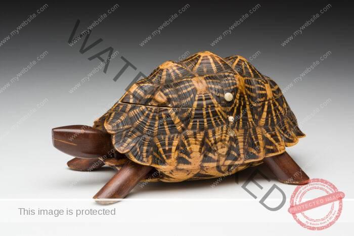 Tortoise tea caddy
