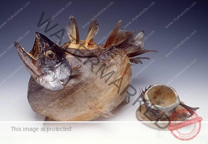 Frances Reed Fish Teapot